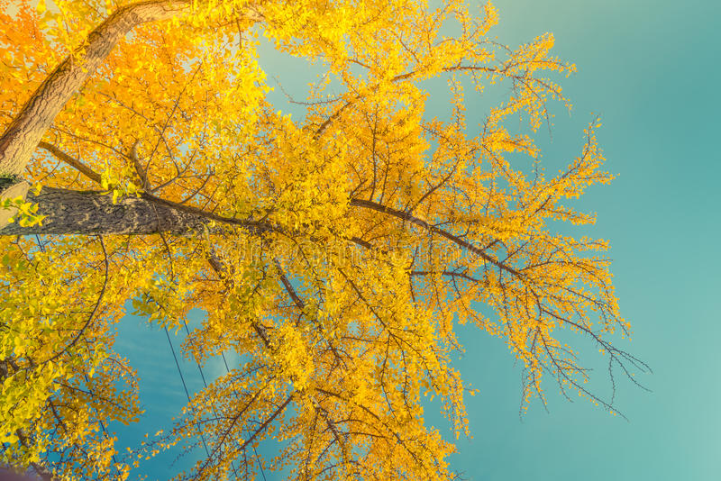 Hojas de otoño coloridas hermosas imágenes de archivo libres de regalías