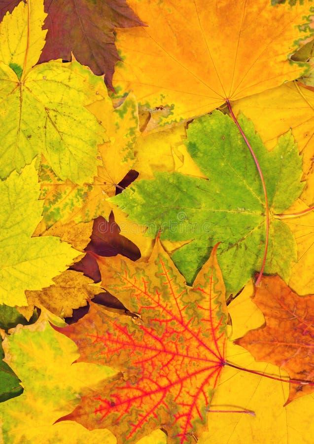Hojas de otoño coloridas Tarjeta vertical foto de archivo