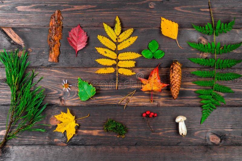 Hojas de otoño, conos, setas y bayas en una composición en una tabla de madera - objetos de la flora del bosque imágenes de archivo libres de regalías