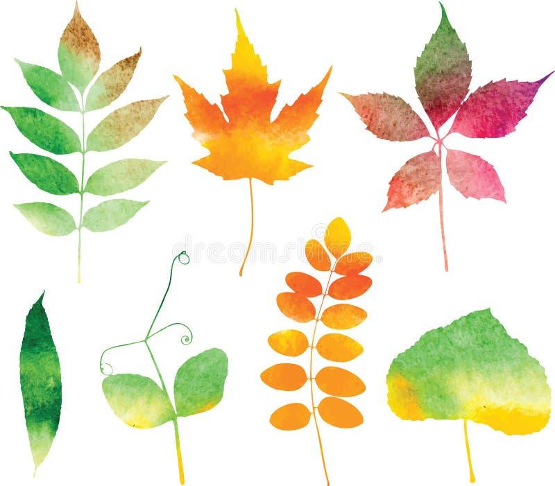 Hojas de otoño de la acuarela del vector fijadas ilustración del vector