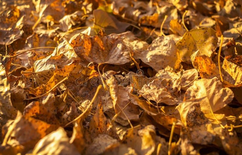 Hojas de otoño de oro Fondo del otoño fotografía de archivo libre de regalías