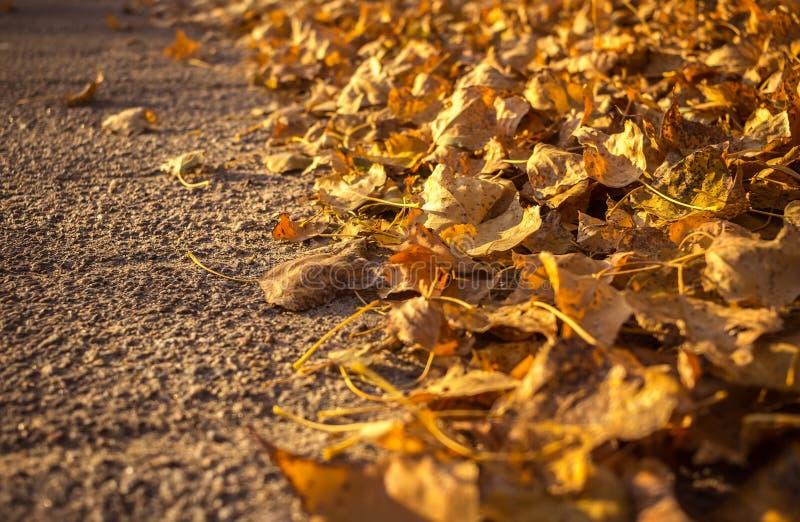 Hojas de otoño de oro a lo largo del camino Espacio para el texto foto de archivo
