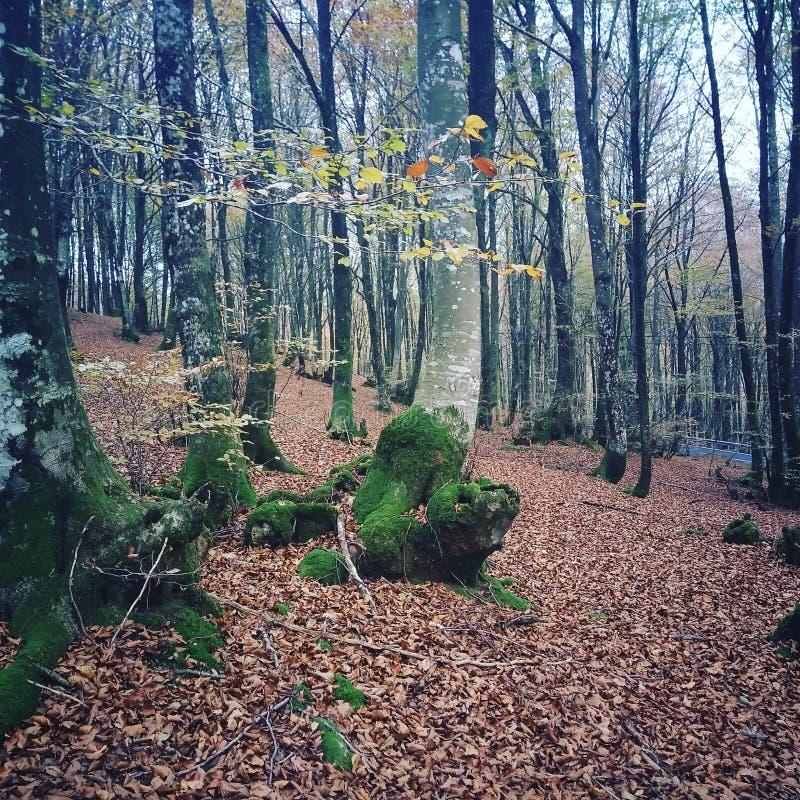 Hojas de otoño del árbol fotos de archivo