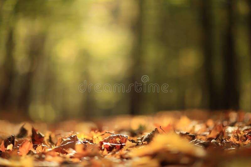 Hojas de otoño del fondo foto de archivo