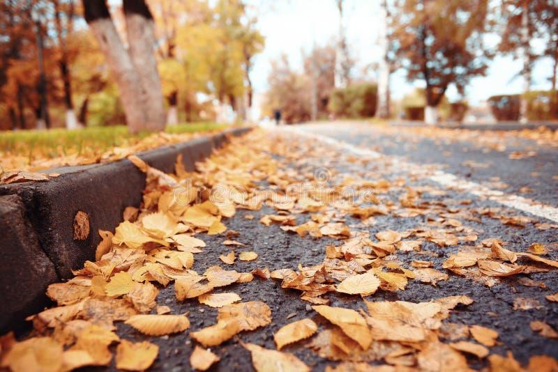 Hojas de otoño del fondo fotografía de archivo