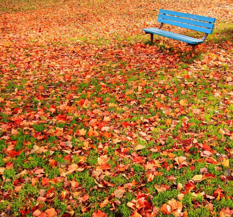 Hojas de otoño del parque del banco fotos de archivo libres de regalías