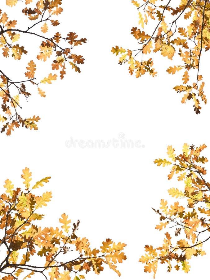 Hojas de otoño en blanco fotografía de archivo