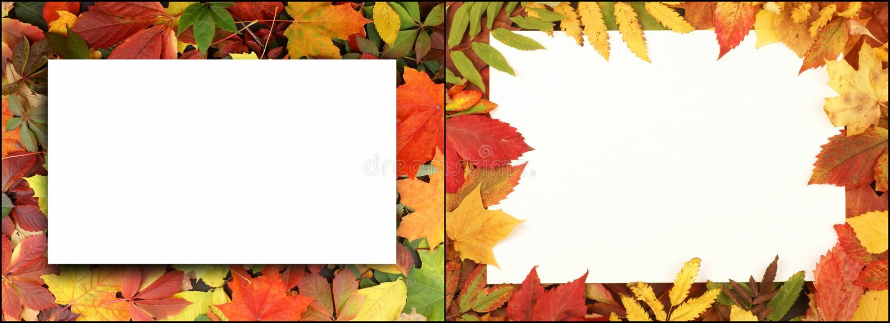 Hojas de otoño en bosque libre illustration