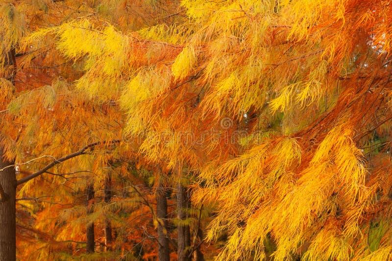 Hojas de otoño en bosque imagenes de archivo