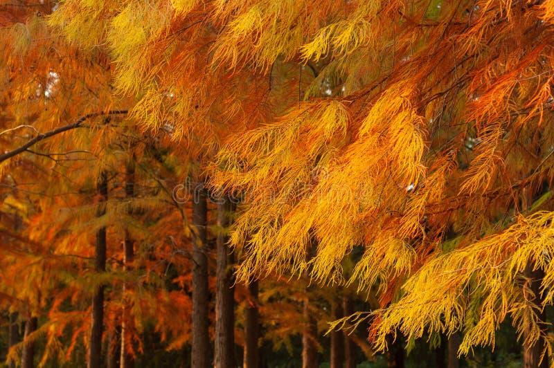Hojas de otoño en bosque imagen de archivo libre de regalías