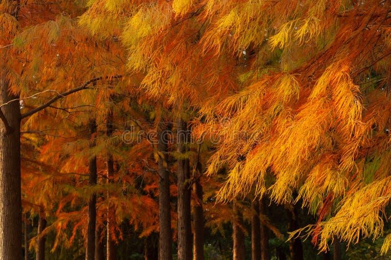 Hojas de otoño en bosque fotografía de archivo