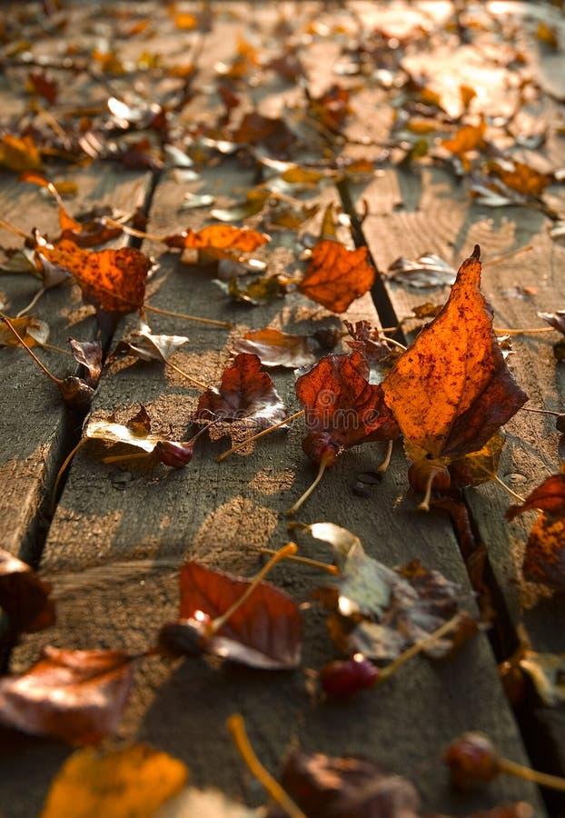 Hojas de otoño en cubierta fotografía de archivo
