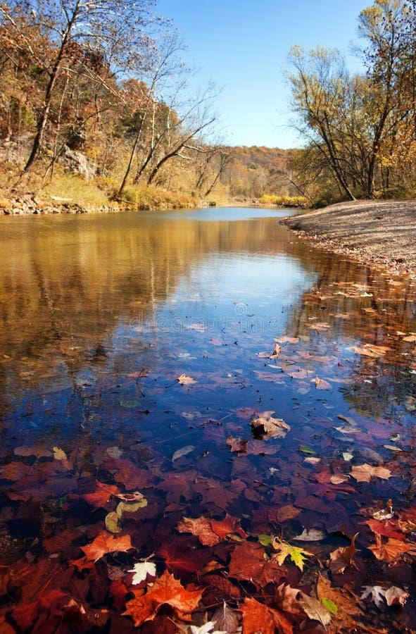Hojas de otoño en el agua foto de archivo