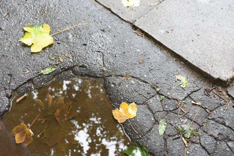 Hojas de otoño en el charco en la tierra del ythe fotos de archivo