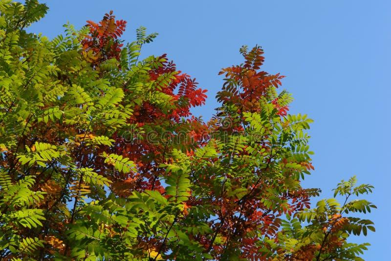 Hojas de otoño en el cielo azul foto de archivo