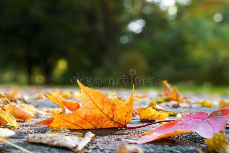 Hojas de otoño en el pavimento imágenes de archivo libres de regalías