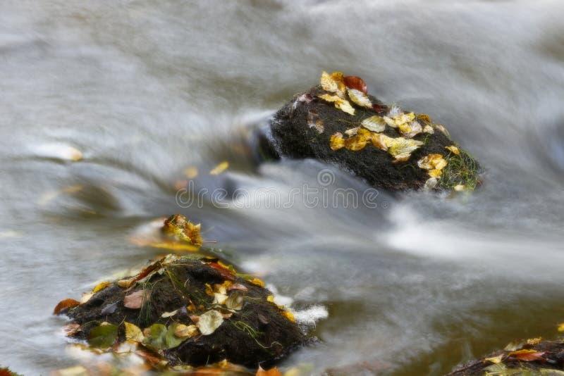 Hojas de otoño en el río imágenes de archivo libres de regalías