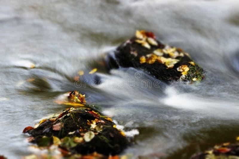 Hojas de otoño en el río fotografía de archivo
