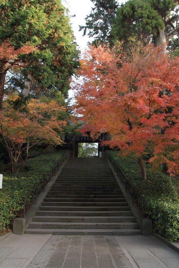 Hojas de otoño en el templo de Engaku fotografía de archivo libre de regalías