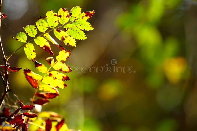 Download Hojas De Otoño En Fondo Borroso Bosque Foto de archivo - Imagen de árbol, afuera: 44854588