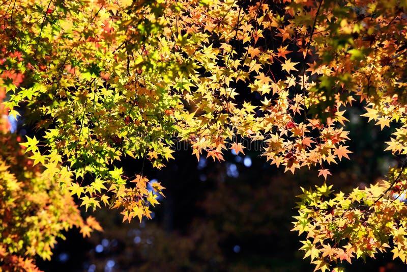 Hojas de otoño en fondo de la sol foto de archivo libre de regalías