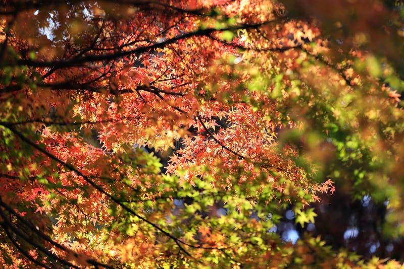 Hojas de otoño en fondo de la sol foto de archivo