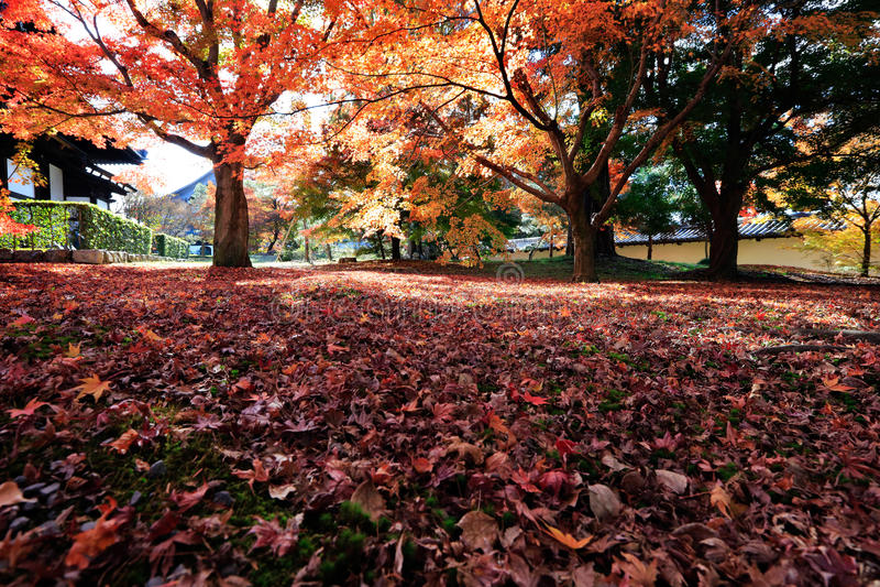 Hojas de otoño en fondo de la sol imagenes de archivo