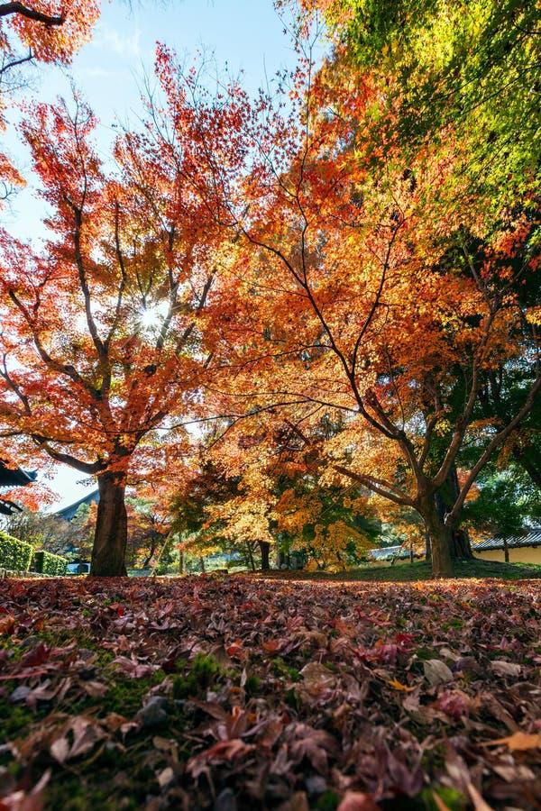 Hojas de otoño en fondo de la sol fotos de archivo libres de regalías