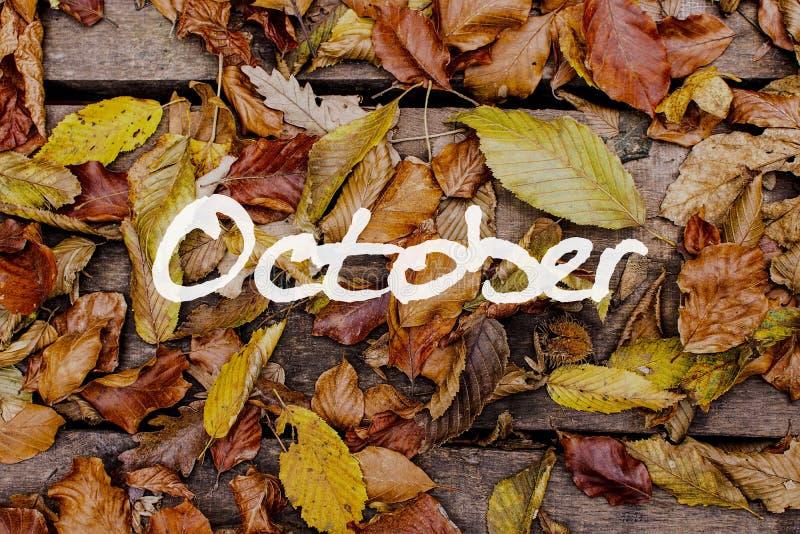 Hojas de otoño en fondo de madera Papel pintado del concepto de octubre imagen de archivo
