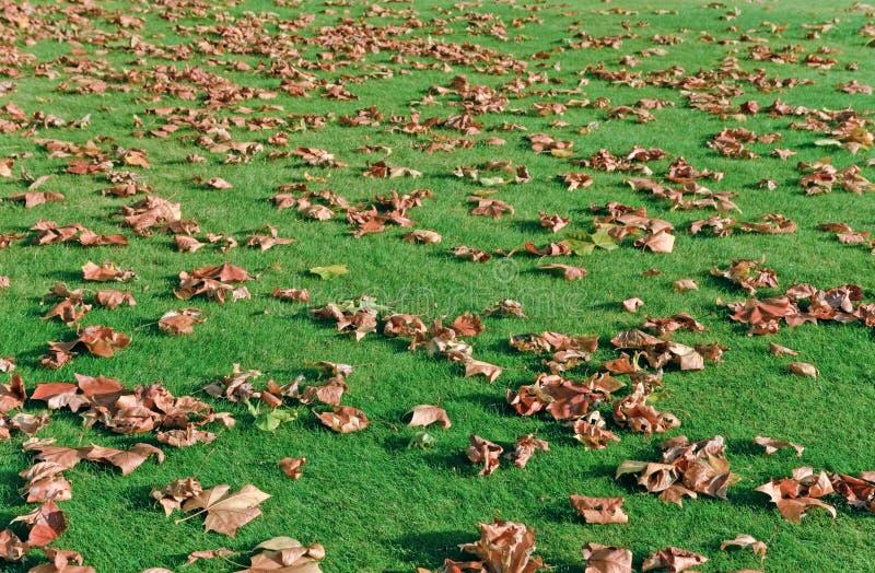 Hojas de otoño en hierba verde imágenes de archivo libres de regalías