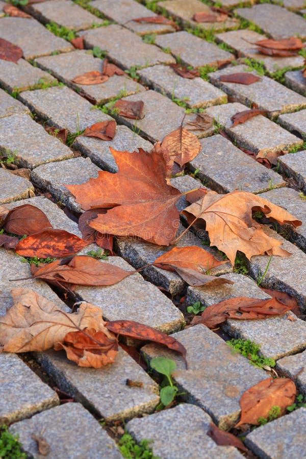 Hojas de otoño en la calzada fotos de archivo