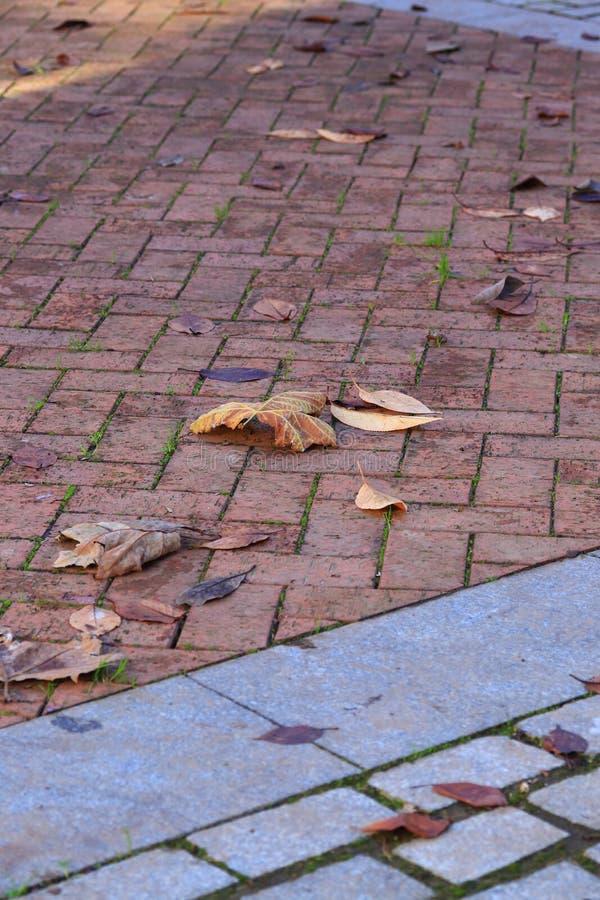 Hojas de otoño en la calzada fotografía de archivo