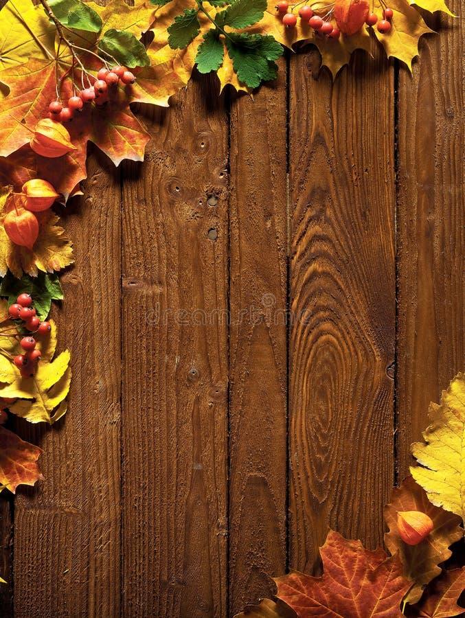 Hojas de otoño en la madera fotografía de archivo