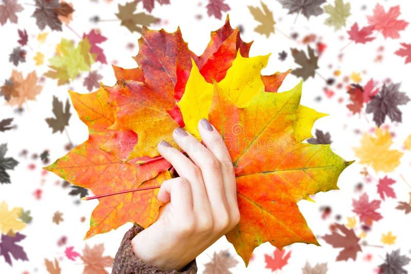Hojas de otoño en la mano foto de archivo libre de regalías