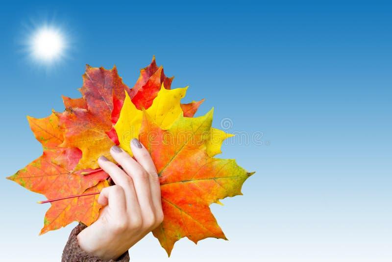 Hojas de otoño en la mano fotografía de archivo libre de regalías