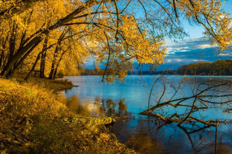 Hojas de otoño en la salida del sol en el río Connecticut fotografía de archivo libre de regalías