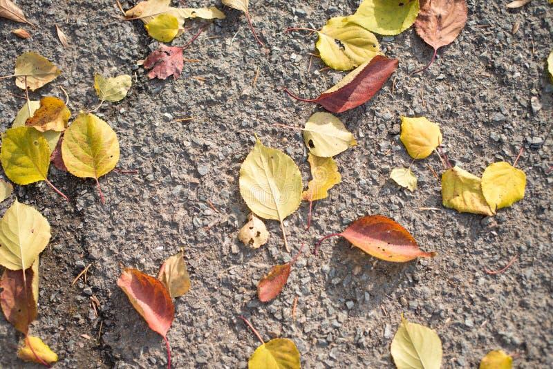 Hojas de otoño en la tierra imágenes de archivo libres de regalías
