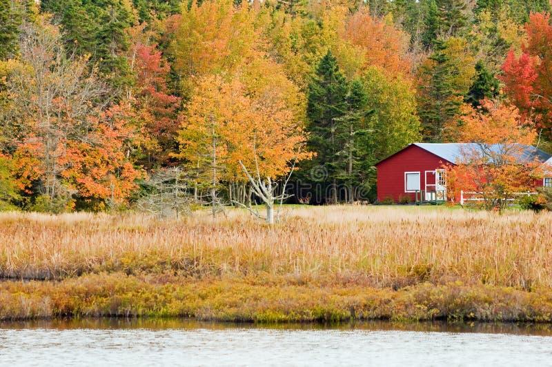 Hojas de otoño en maderas rústicas foto de archivo libre de regalías