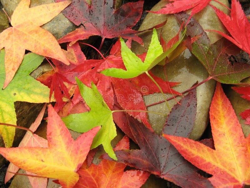 Hojas de otoño en rocas imagen de archivo libre de regalías