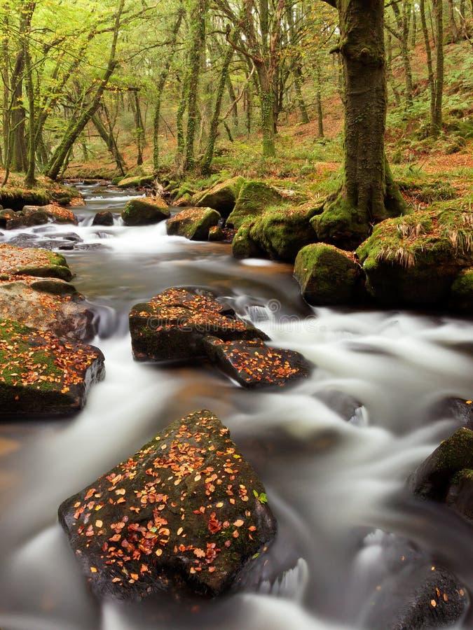 Hojas de otoño en rocas en corriente foto de archivo