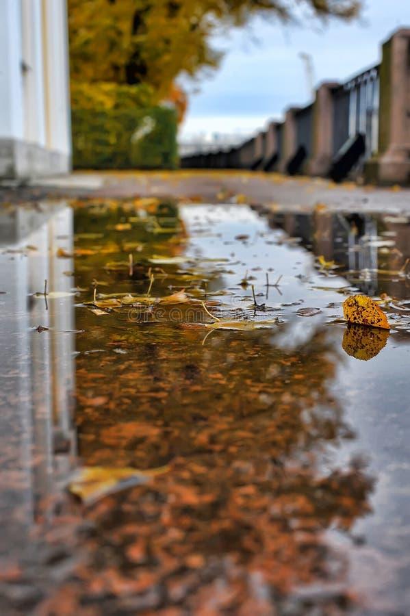 Hojas de otoño en un charco fotografía de archivo