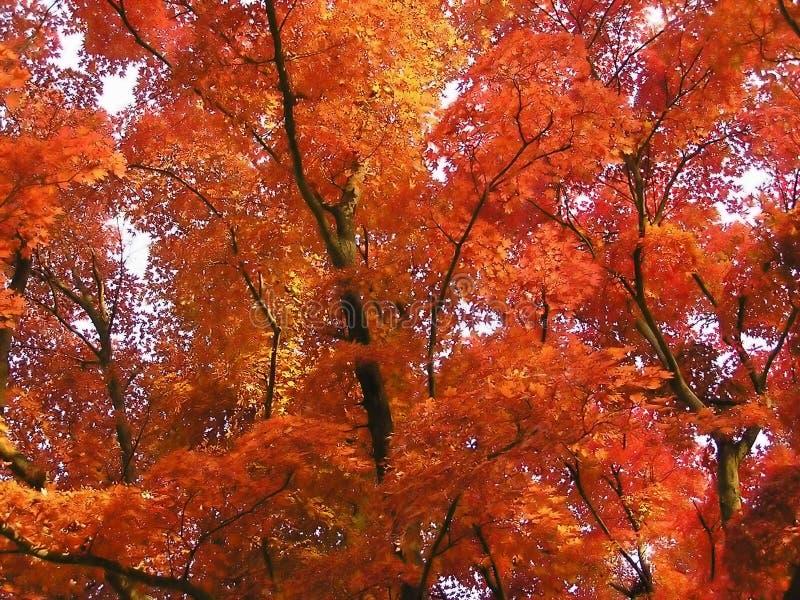 Hojas de otoño en un día asoleado fotos de archivo libres de regalías