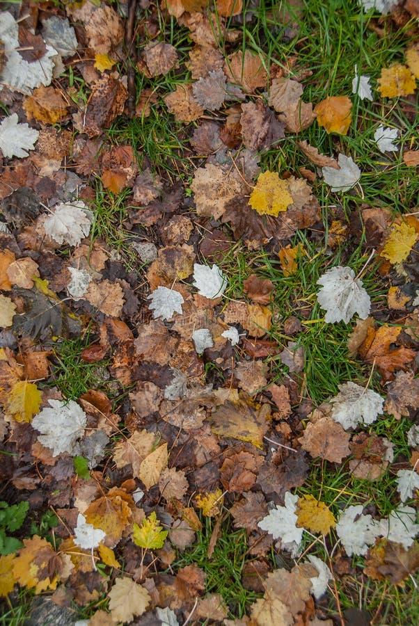 Hojas de otoño en una montaña griega imagen de archivo libre de regalías