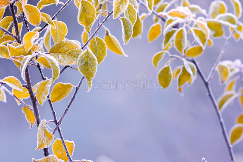 Hojas de otoño escarchadas del colourfull foto de archivo