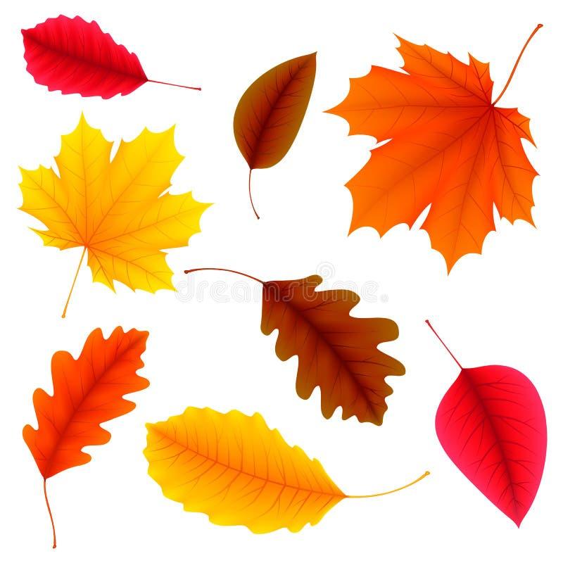Hojas de otoño fijadas stock de ilustración