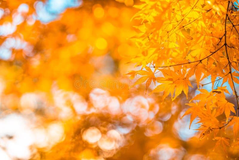 Hojas de otoño, foco muy bajo fotos de archivo libres de regalías