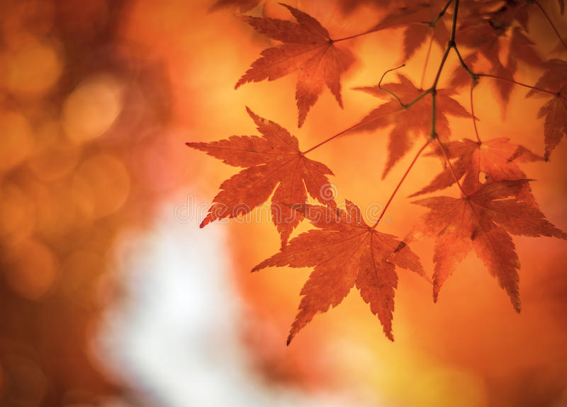 Hojas de otoño, foco muy bajo imagen de archivo