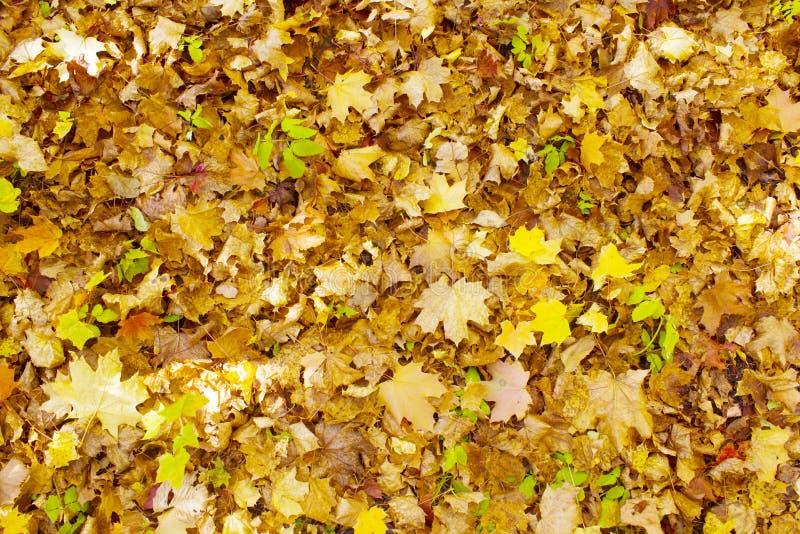 Hojas de otoño hermosas imagen de archivo