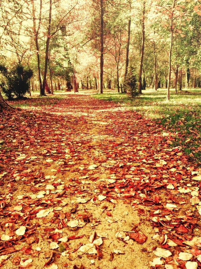 Hojas de otoño hermosas en trayectoria del parque fotos de archivo
