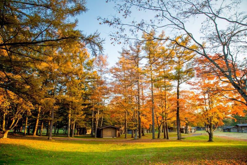 Hojas de otoño de la caída en árboles en Japón fotografía de archivo libre de regalías